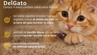 Photo of 20 de febrero Día Internacional del Gato – Denuncia Maltrato Animal