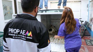 Photo of Entregan a albergue de Huehuetoca a jauría de perros que atacó y mató a mujer en Tecámac