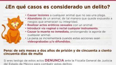 Photo of Hasta dos años de prisión en el Estado de México por maltrato animal o abandono ¡Denuncia!